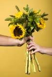 Mani che tengono i girasoli Fotografie Stock Libere da Diritti