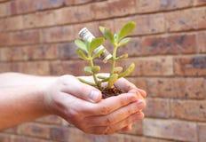 Mani che tengono il giovane albero dei soldi Fotografia Stock