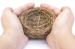 Mani che tengono il nido di un uccello immagine stock