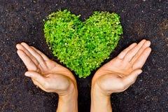 Mani che tengono l'albero a forma di del cuore verde Fotografie Stock