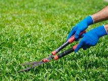 Mani che tengono le forbici di giardinaggio su erba verde C di giardinaggio Immagine Stock Libera da Diritti