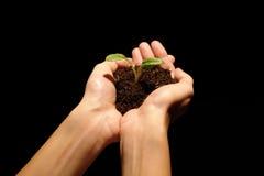 Mani che tengono pianta Fotografie Stock