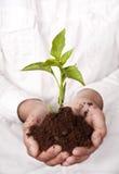 Mani che tengono pianta che germoglia dal suolo Immagini Stock Libere da Diritti