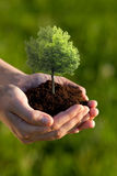 Mani che tengono piccolo albero Fotografia Stock Libera da Diritti