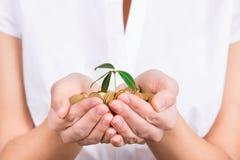 Mani che tengono poca pianta che cresce dalle monete come simbolo di soldi Immagine Stock