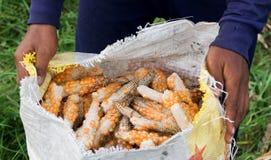 Mani che tengono un cereale del og del sacchetto Immagine Stock Libera da Diritti