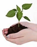 Mani che tengono una pianta fotografia stock