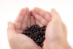 Mani con i chicchi di caffè Fotografia Stock Libera da Diritti