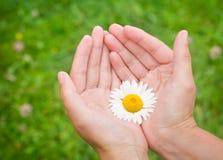 Mani con il fiore Fotografia Stock Libera da Diritti