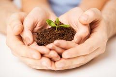 Mani con il germoglio e la terra verdi Fotografia Stock Libera da Diritti