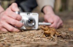 Mani con la macchina fotografica che fa foto della rana di seduta Fotografia Stock Libera da Diritti