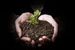 Mani con la pianta Fotografia Stock Libera da Diritti