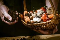 Mani con le verdure biologiche Immagini Stock Libere da Diritti