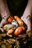 Mani con le verdure biologiche Immagine Stock Libera da Diritti