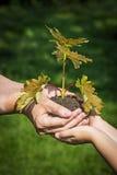 Mani con poco albero - un concetto di ecologia immagine stock libera da diritti