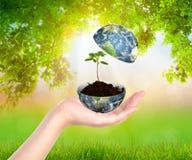 Mani con terra e l'albero Fotografia Stock Libera da Diritti