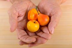 Mani corrugate della donna anziana Fotografia Stock Libera da Diritti