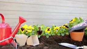 Mani dei giardinieri che piantano i fiori in vaso con sporcizia o suolo Concetto di giardinaggio archivi video