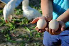 Mani del bambino con le uova Fotografie Stock Libere da Diritti