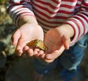 mani del bambino della farfalla Fotografia Stock Libera da Diritti