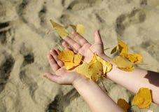 Mani del bambino e dei fogli Fotografie Stock Libere da Diritti