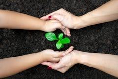 Mani del bambino e dell'adulto di concetto di ecologia che tengono pianta un alberello dell'albero con sul mondo a terra immagini stock