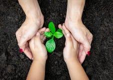 Mani del bambino e dell'adulto di concetto di ecologia che tengono pianta un alberello dell'albero con sulla Giornata mondiale de fotografia stock libera da diritti