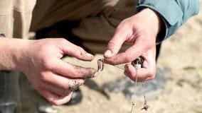 Mani del pescatore che preparano un alto vicino del verme di pesca dell'esca stock footage