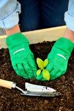 Mani del primo piano in guanti che piantano germoglio Fotografia Stock Libera da Diritti
