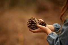 Mani del ` s dei bambini, pigna, primo piano Fotografie Stock Libere da Diritti