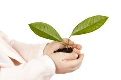 Mani del ` s del bambino con la pianta verde isolata Immagini Stock Libere da Diritti