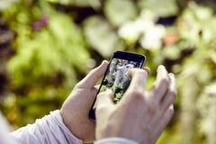 Mani del ` s dell'uomo di vista del primo piano facendo uso di un telefono cellulare, prendente foto dei fiori degli alberi e rip Immagine Stock