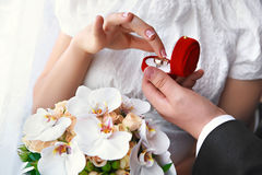 Mani del ` s dello sposo e della sposa con le fedi nuziali Fotografie Stock Libere da Diritti
