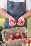 Mani dell'agricoltore che mostrano due mele rosse Immagini Stock Libere da Diritti