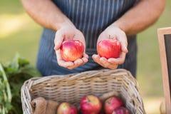 Mani dell'agricoltore che mostrano due mele rosse Fotografie Stock Libere da Diritti