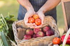 Mani dell'agricoltore che mostrano tre pomodori Fotografia Stock Libera da Diritti