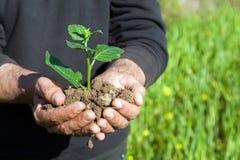 Mani dell'agricoltore con la pianta Fotografia Stock Libera da Diritti