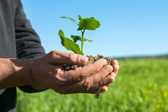 Mani dell'agricoltore con la pianta Fotografia Stock