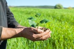 Mani dell'agricoltore con la pianta Immagini Stock Libere da Diritti