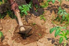 Mani dell'agricoltore rurale africano con l'agricoltura dello strumento, aranti terra Fotografia Stock Libera da Diritti