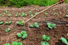 Mani dell'agricoltore rurale africano con l'agricoltura dello strumento, aranti terra Immagine Stock Libera da Diritti