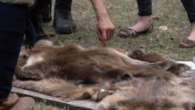 Mani dell'uomo che prendono la pelliccia dell'animale selvatico della terra Pelle animale del cappotto da vendere al villaggio ru archivi video