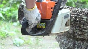 Mani dell'uomo del lavoratore con i guanti che segano il tronco di albero spesso dell'acero con la motosega archivi video