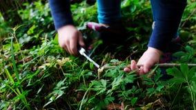 Mani della bambina o del ragazzo che utilizza un coltello svizzero, seganti un pezzo di legno nella foresta, nessuno video d archivio