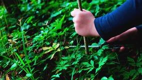 Mani della bambina o del ragazzo che utilizza un coltello svizzero, seganti un pezzo di legno nella foresta, nessuno stock footage