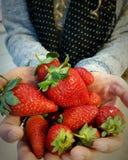 Mani della donna che oferring le fragole rosse Immagine Stock Libera da Diritti