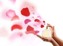 Mani della donna che spruzzano i petali rosa Fotografie Stock