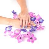 Mani della donna con i fiori luminosi dell'anemone e del manicure intorno Fotografia Stock Libera da Diritti