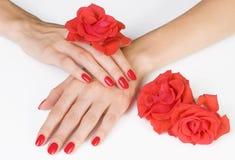 Mani della donna con il color scarlatto del manicure e rose Fotografia Stock