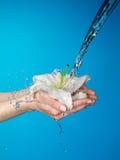 Mani della donna con il giglio e la corrente di acqua. Fotografia Stock